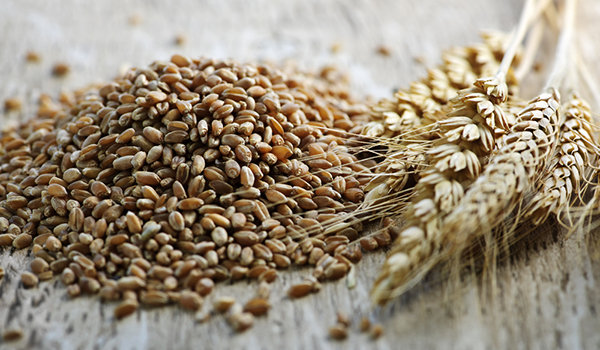 The-Truth-About-Whole-Grain-vs.-Whole-Wheat